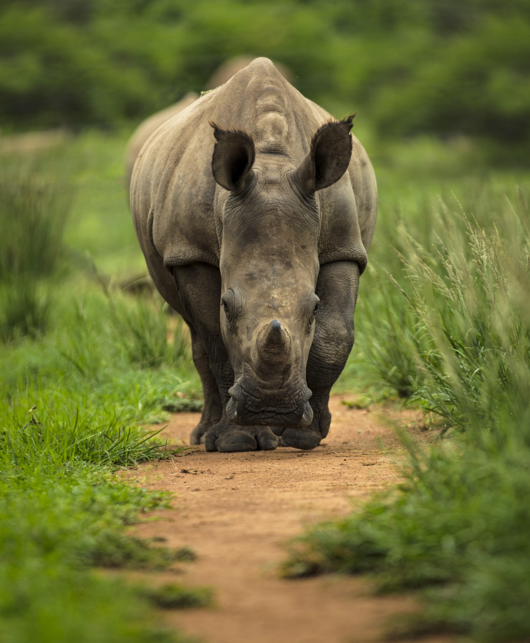 Care for Wild Wines: The Wine Brand Helping to Save Endangered Rhinos