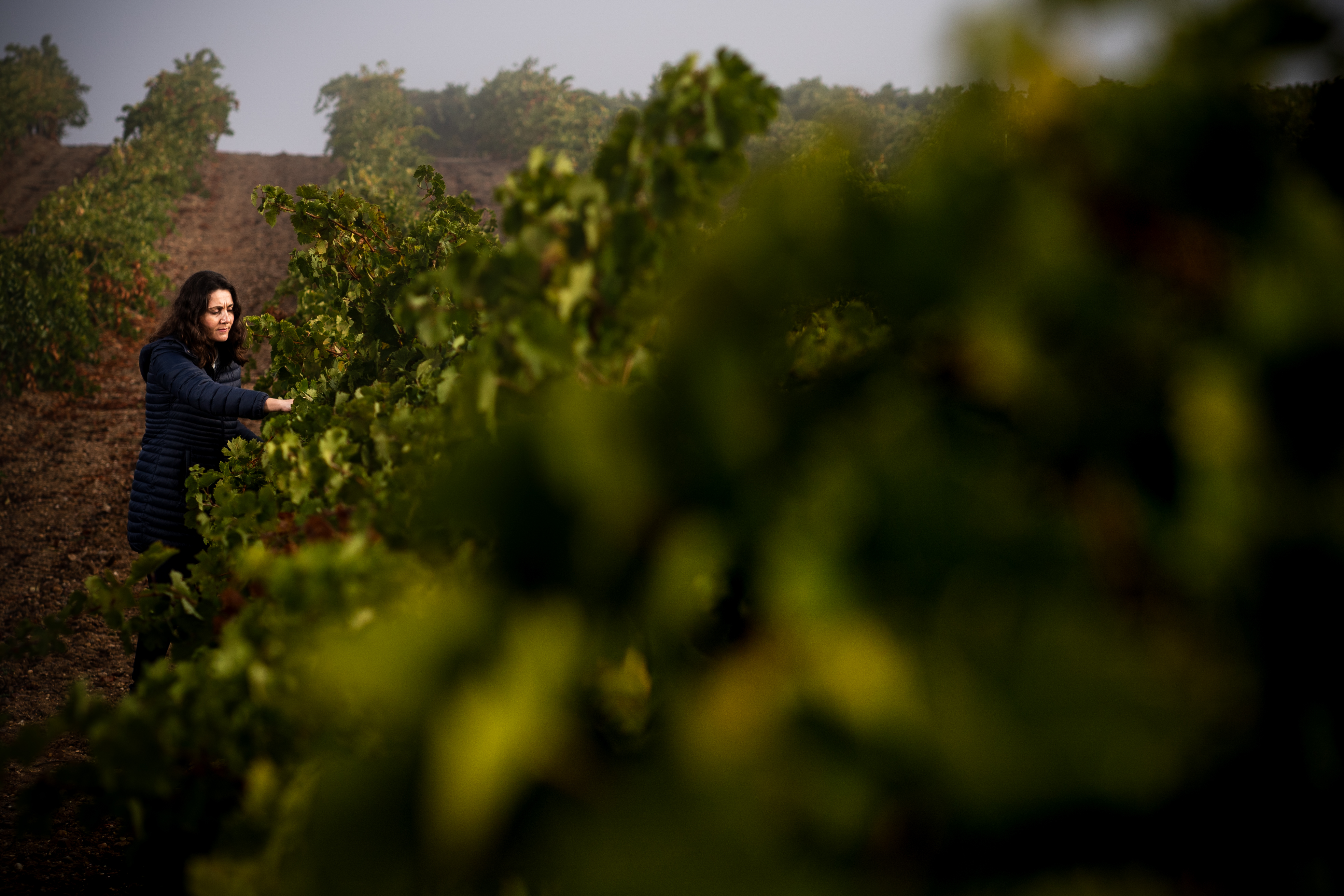Verdejo – The Green, Green Grape of Spain