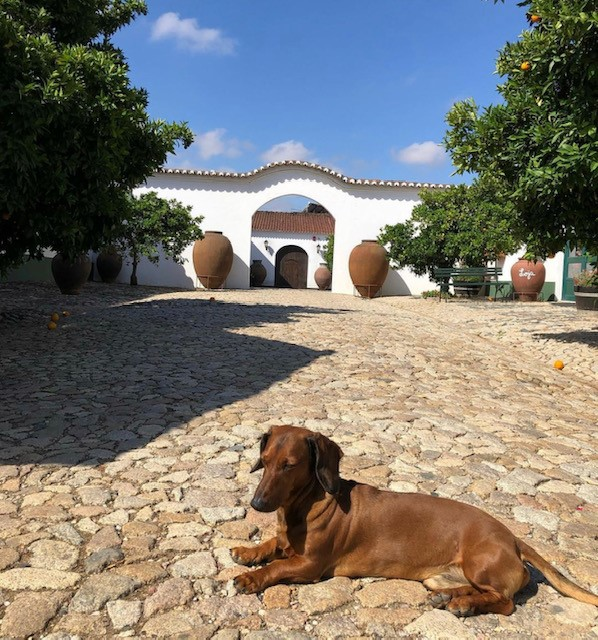 Cortes de Cima: The Portuguese wines that started life outside the law