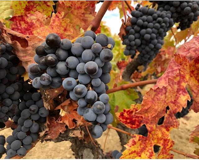 Autumn wines to savour