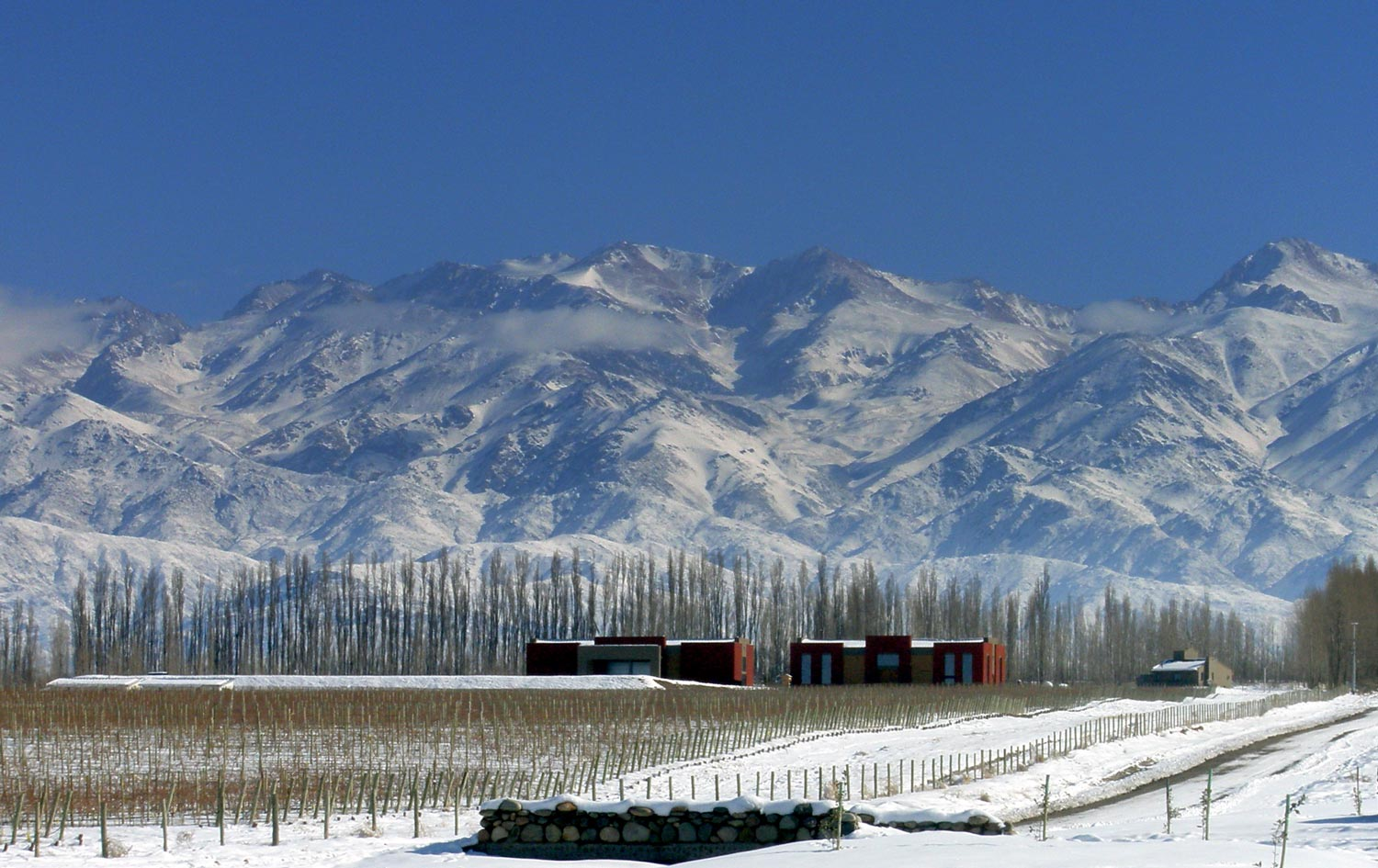 South American Wines with Altitude