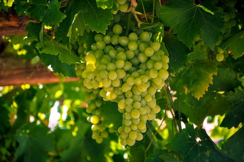 Explore Chardonnay